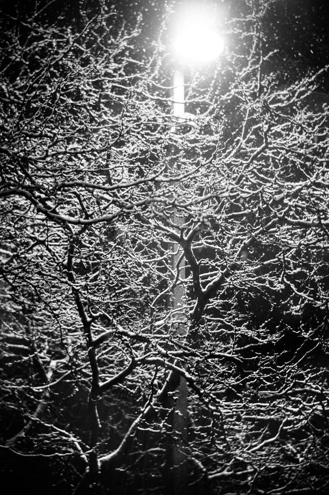 morning-snow-3061