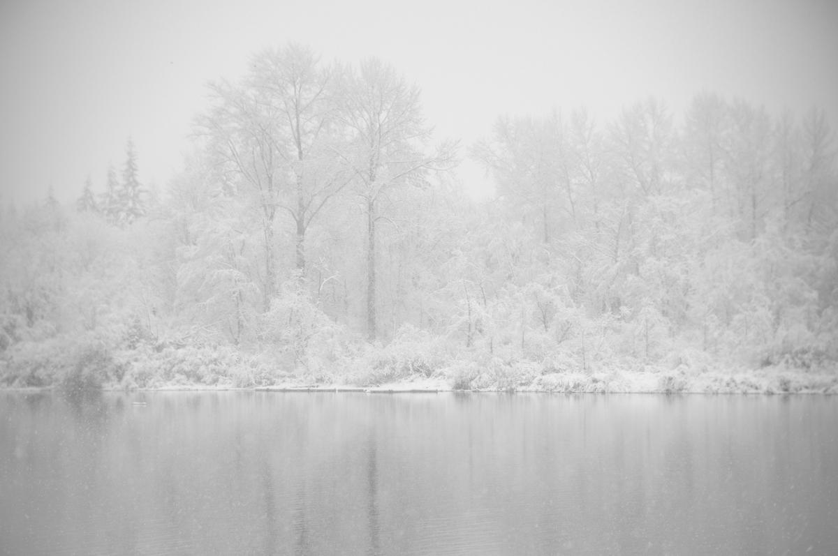 Beaver Pond I