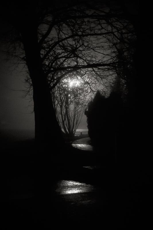 shadows_fog_DSC6536