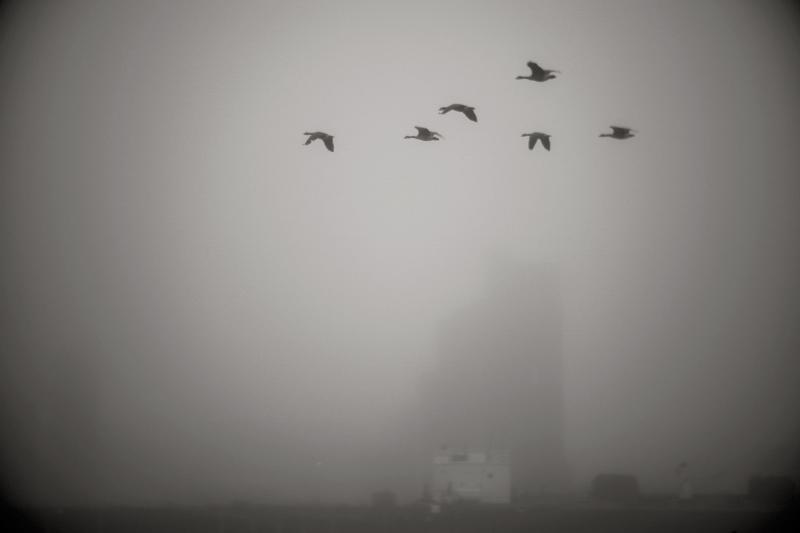 shadows_fog_DSC6582